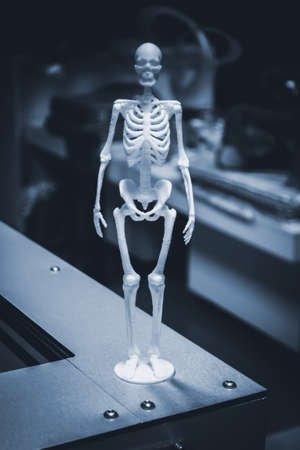 Object human skeleton printed by 3d printer.