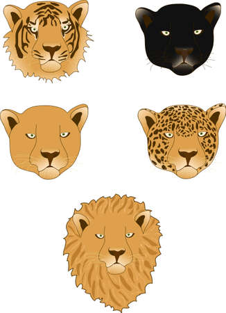 Lion, panther, leopard, tiger and lioness isolated on white background Vector