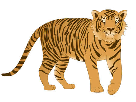 Tiger isolated on white background Иллюстрация