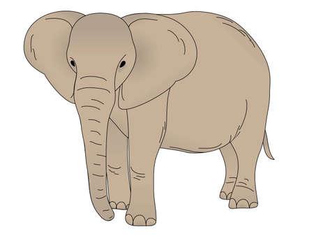 herbivorous animals: Elephant isolated on white background
