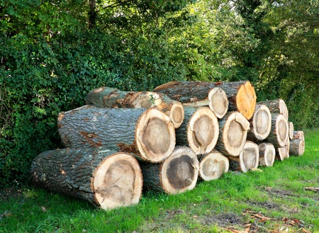 sawed: Pile of large tree trunks in a park.