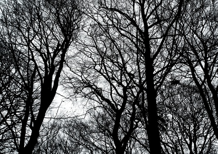 dreary: Tree branches in a forest in winter. Stock Photo