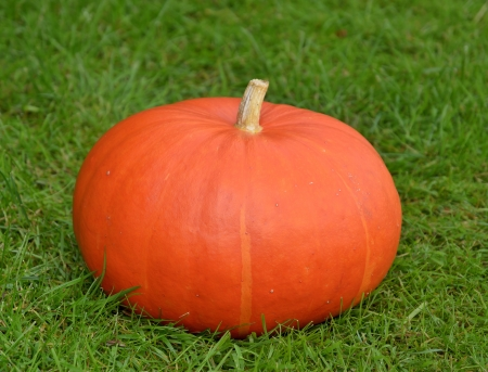 A ripe and brightly colored pumpkin on grass  photo