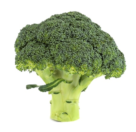 brocoli: Fresh broccoli isolated on a white background.