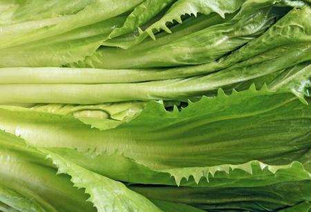 andijvie: Close-up foto van verse groene andijvie