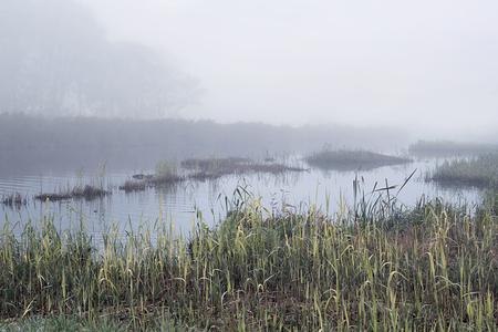 mist: Dutch canal in autumn with mist.