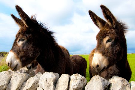 group of donkeys near the wall of stones with grass and sky background