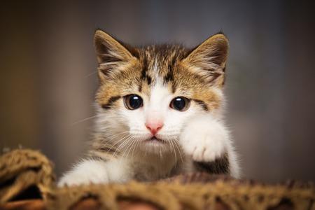 peeking: Cute kitten peeking out of a chair Stock Photo