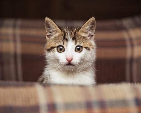 kitten: Cute kitten peeking out of a chair Stock Photo