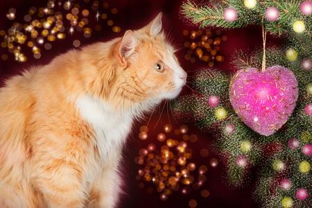 gato jugando: gato jengibre joven, miradas de sorpresa en el árbol de Navidad en un fondo festivo