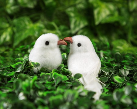 other: Two little birds in love looking at each other on the background of nature