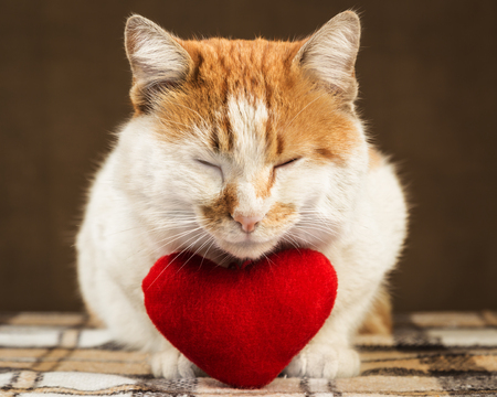 Two-color cute ginger cat meditates beside lies plush toy heart. Stock Photo
