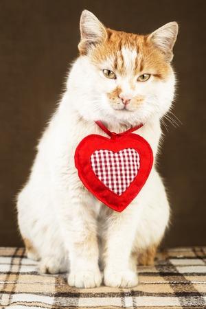 Weiße Katze mit roten Flecken und geheimnisvollen Blick mit Dekoration in Form von Herzen auf dem Hals auf häusliche Umgebung Hintergrund Standard-Bild - 52703980