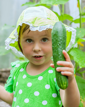 harvests: Little cute girl harvests cucumbers Stock Photo