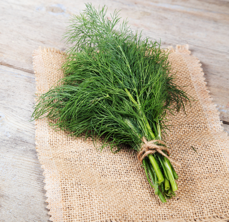 tied in: Fresh dill tied in a bun on a wooden surface and a napkin from jute cord and scissors