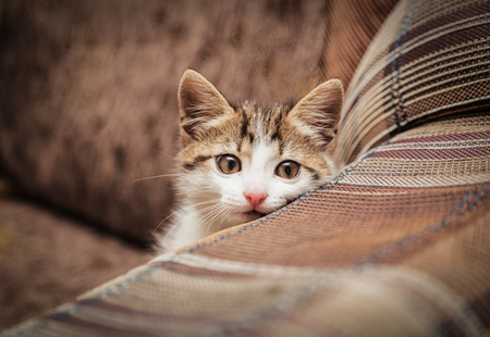 Cute kitten peeking out of a chair in a home environment