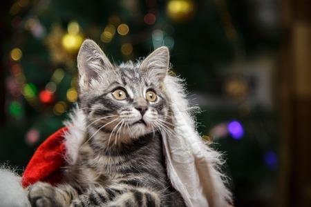 Little kitten in a Santa Claus hat Stock fotó