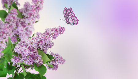 Beautiful abstract background. A butterfly flies to a lilac flower. Stock Photo