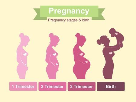 nacimiento: Etapas del embarazo, trimestres y nacimiento, mujer embarazada y del bebé. Elementos de Infografía