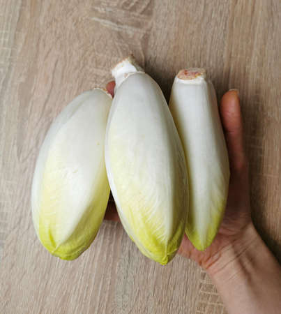 Chicory, endive, succory. Witlof vegetable. Fresh chicory on a wooden table
