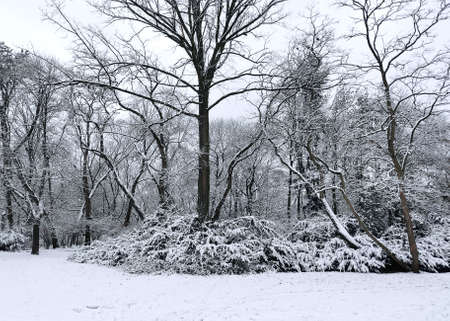 Panoramic shot of winter and snow-covered trees Zdjęcie Seryjne
