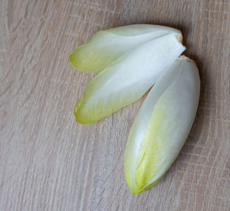 Chicory, endive, succory. Witlof vegetable. Fresh leaves chicory on a wooden table