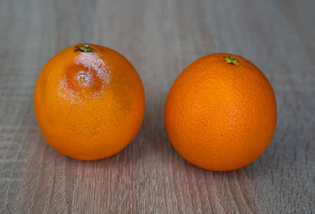 One moldy rotten and one fresh orange fruit on wooden table