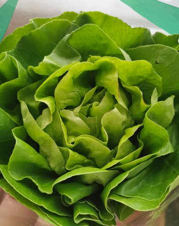 Green butter lettuce vegetable or salad