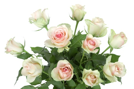 yellow roses: bouquet of roses on white background