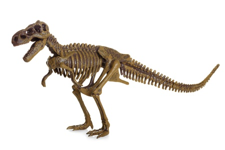 Tyrannosaurus Rex Skelet op wit wordt geïsoleerd
