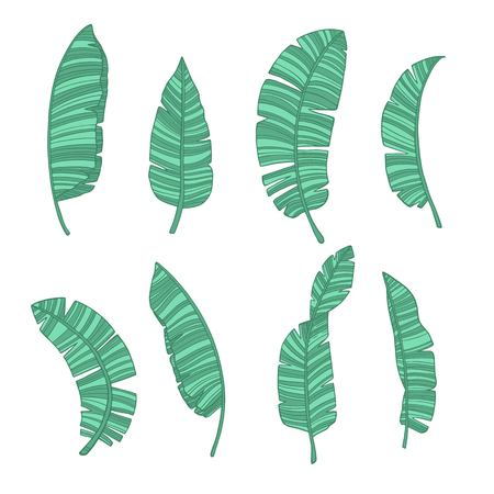 Green banana leaves set. Vector illustration for your design on white background. Print, clothes, object, holiday time Illustration