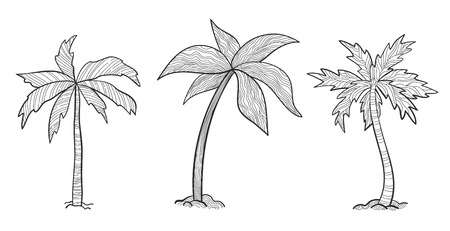 Set tropical palm trees with leaves, mature and young plants, black silhouettes isolated on white background. Sketch style for your design. Illustration