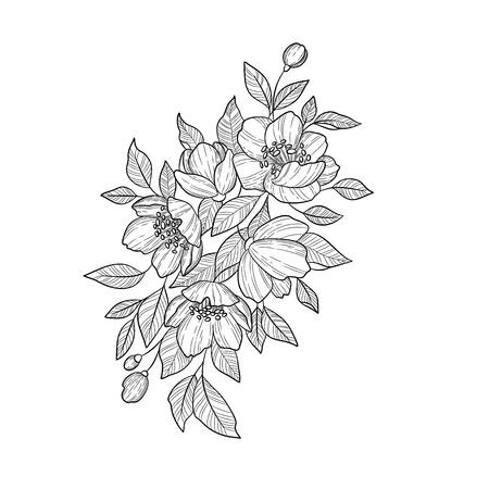 Handzeichnung und Skizze Camellia Japonica Blume. Schwarz und weiß mit Strichzeichnungen.