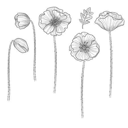 Vector poppy. Floral botanical flower. Wild spring leaf wildflower isolated. Vector wildflower for background, texture, wrapper pattern, frame or border