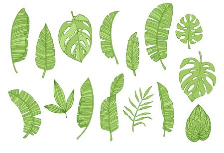Set leaf palm trees. hand drawn illustrations isolated on a white background