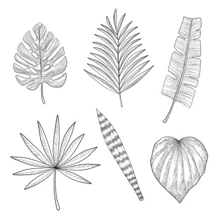 Vector set of tropical palm leaves, black silhouettes isolated on white background. Foliage design elements of tropical nature. Stylized images and simple shapes for logos and natural decor.