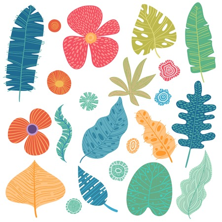 Set of tropical leaves. Vector cartoon rainforest leaves isolated on white background. Brazil jungle flora in flat style. Banana leaf, palm, fern, monstera, and other. Tropic plants