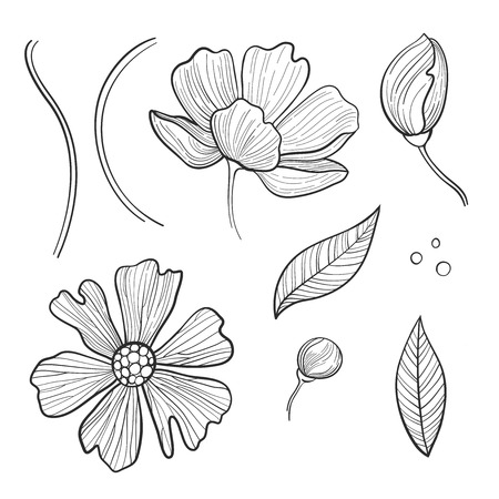 Vector Camellia flowers set. Can be used as romantic background for web pages, wedding invitations, greeting cards, postcards, packaging design, prints, stickers, wrapping paper, patterns, textile.