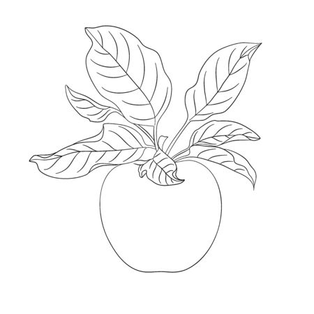 Apple with leaves in outline style. For colorful paper book for children. For your design. Vector illustration on white background.
