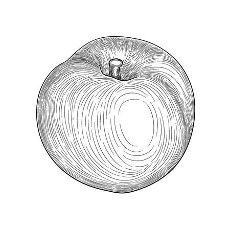 Hand drawn sketch style peach fruit. Ripe whole peach and peach quarter. fresh farm fruits vector illustration