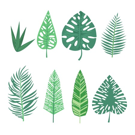 Set of watercolor tropical leaf collection, Summer plant soft color, Green leaves element for decoration, Botany art with brush, Isolated white background. Illustration