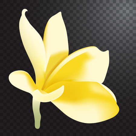exoticism: Vector illustration of realistic frangipani flower on half transparent background. Illustration