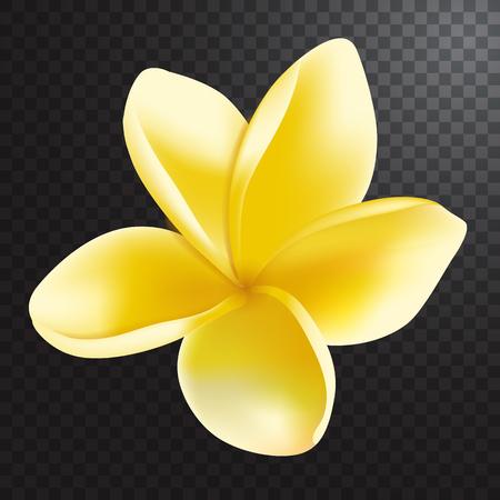 frangipani flower: Vector illustration of realistic frangipani flower on half transparent background. Illustration