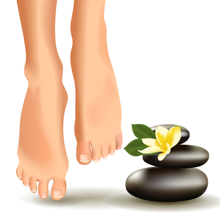 furniture part: Vector illustration of SPA concept with realistic female feet, frangipani and stones. Illustration