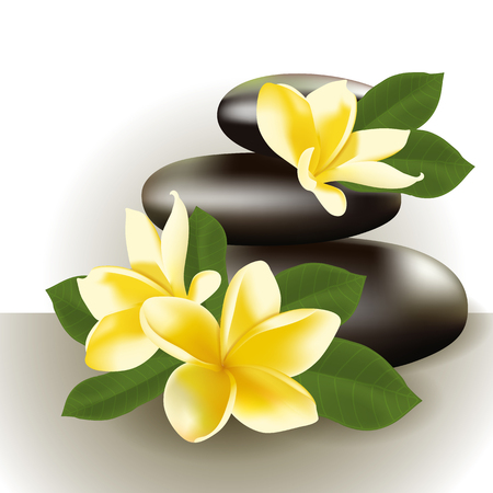 pebble: Vector illustration of Spa still life with frangipani flower.