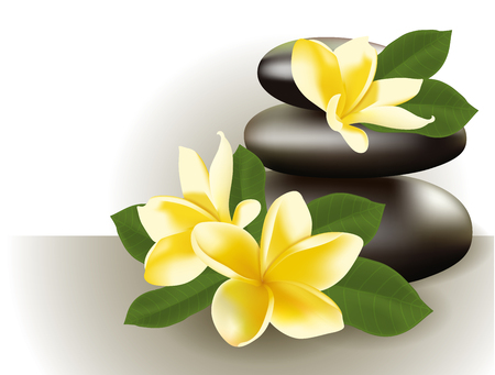oriental medicine: Vector illustration of Spa still life with frangipani flower.