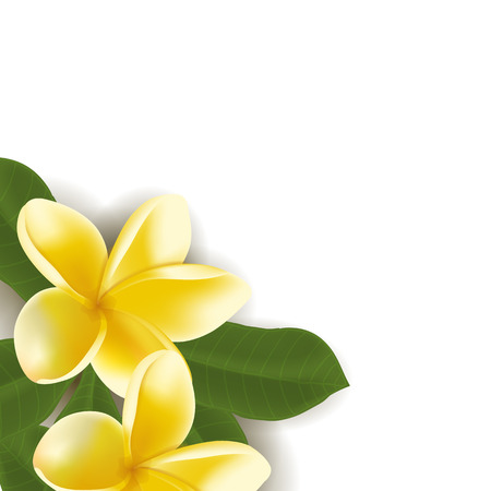 Background with Realistic frangipani flower with leaves isolated on white. Vector illustration.