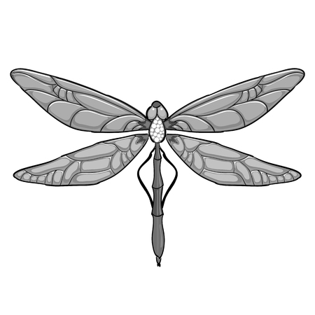 Grey coloured Dragonfly on white background. Vector illustration for your design.