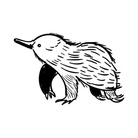 Vector illustration of handdrawn Australian animal Echidna in doodle style.