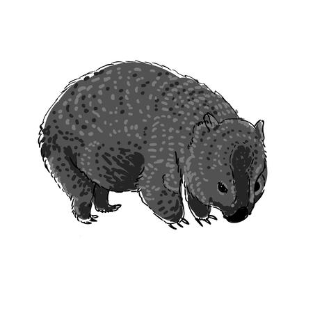 wombat: ilustración vectorial de dibujado a mano Wombat animales de Australia en el estilo de dibujo.